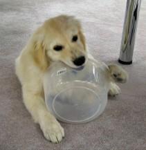 Bucket Head No 1_6 May 2005